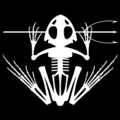 2015 frogman